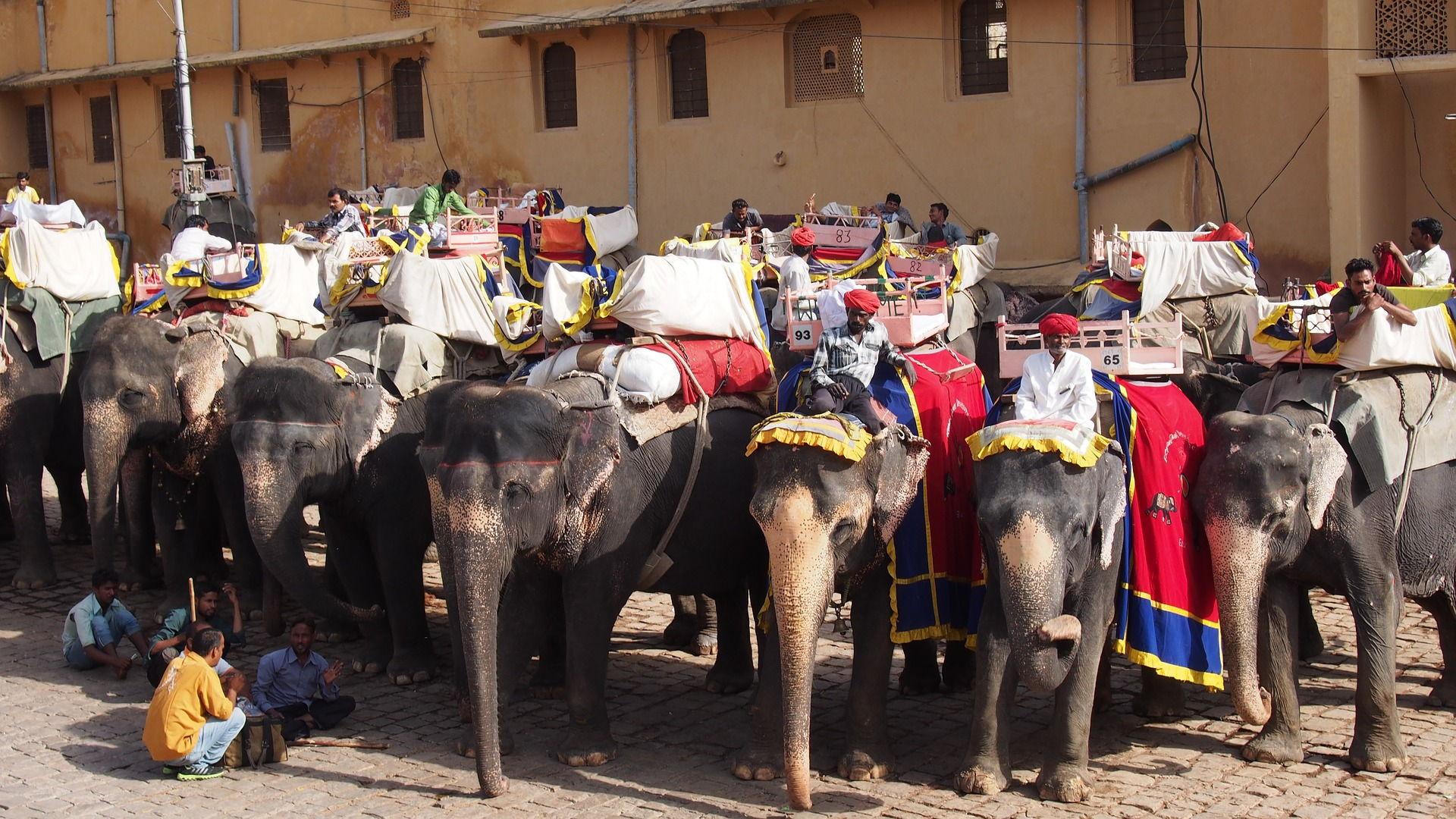voluntariado con animales en jaipur