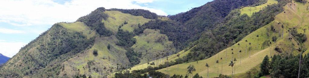 Valle de Cocora Voluntariado en Colombia
