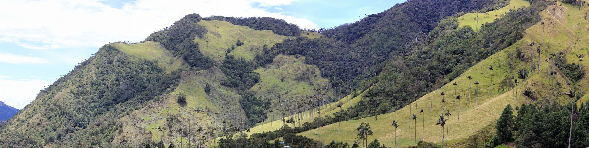 Valle de Cocora Voluntariado en Colombia