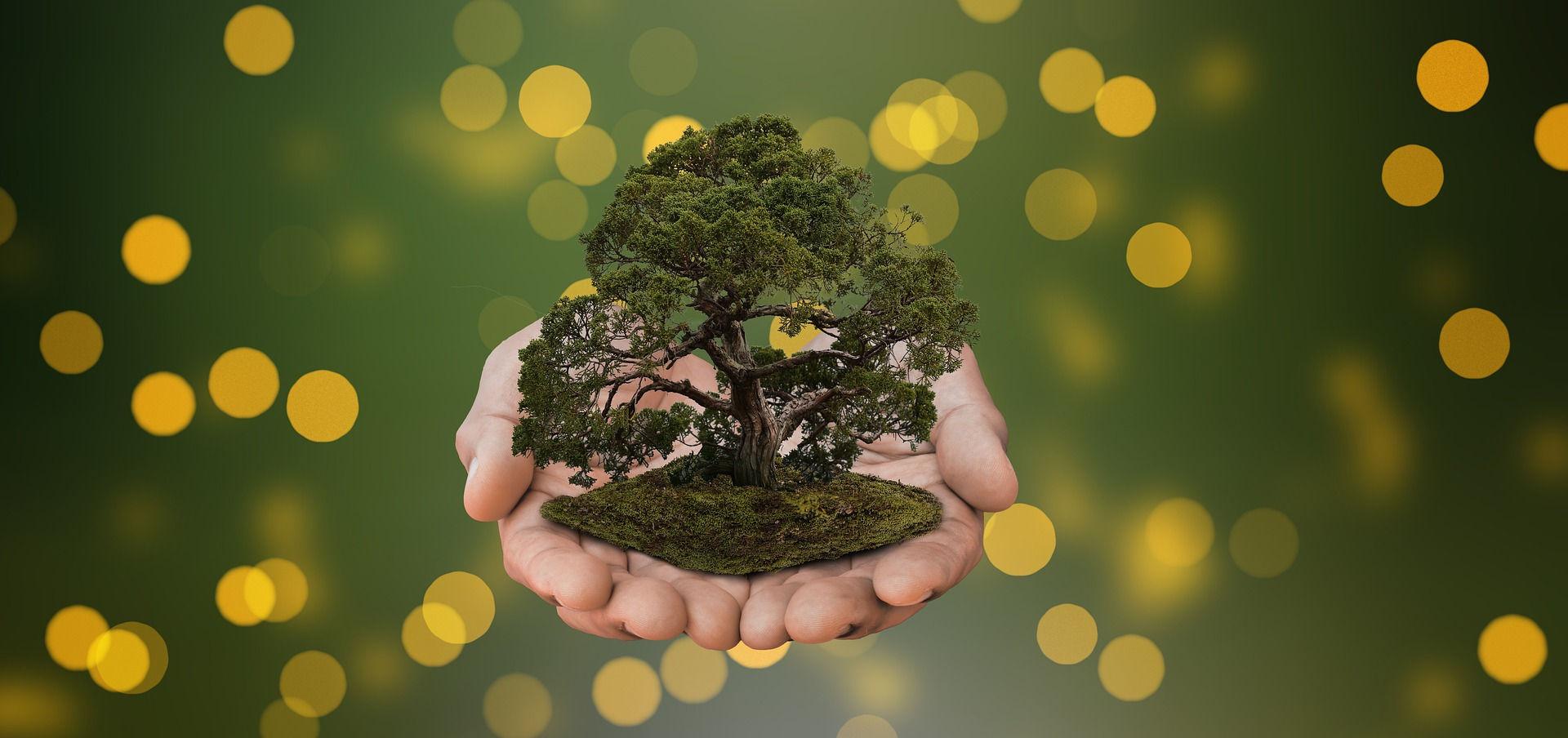 voluntariado en medio ambiente