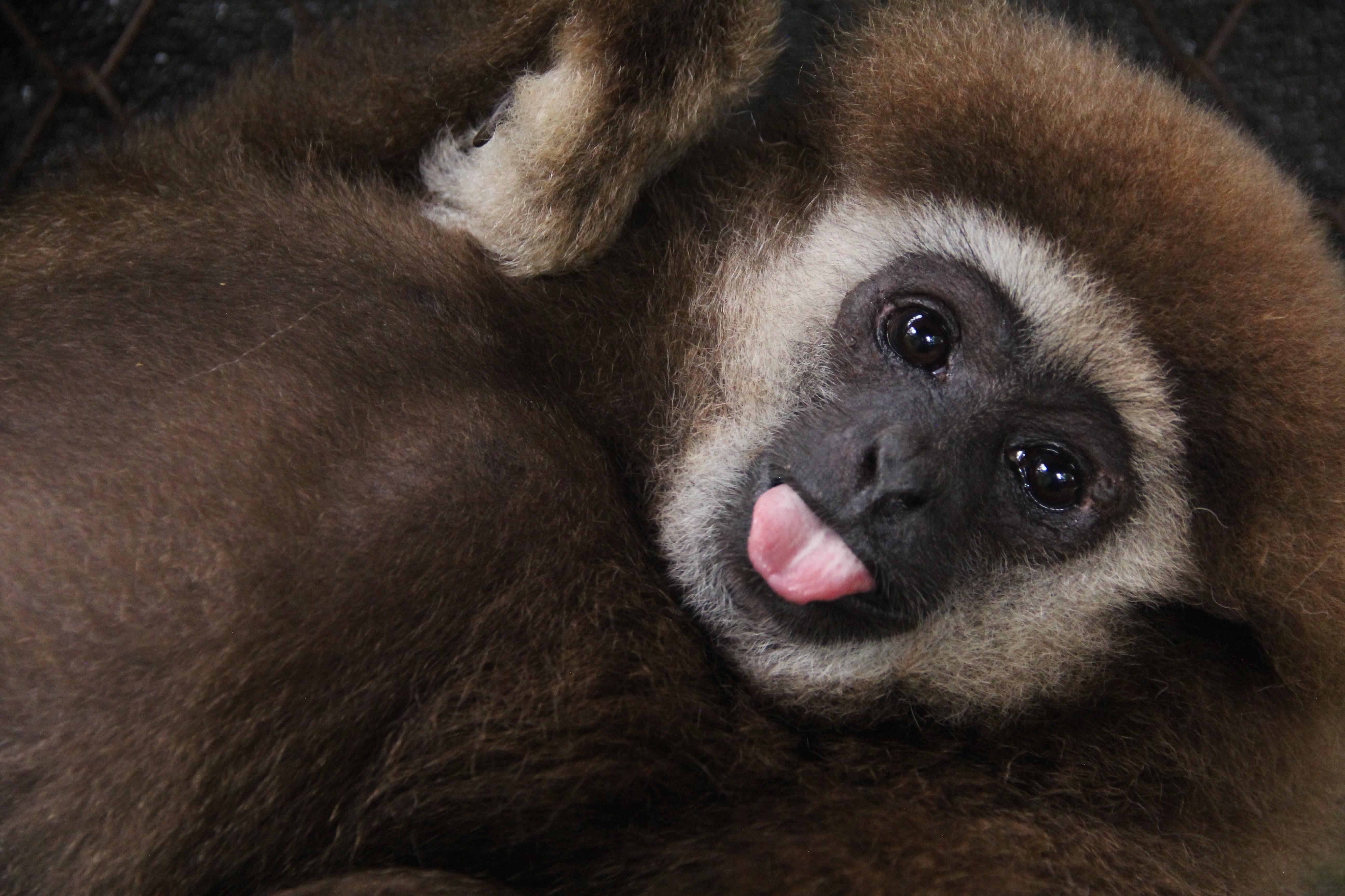 colabora con animales voluntarios en el mundo