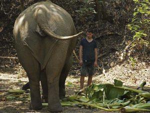 elefantes2