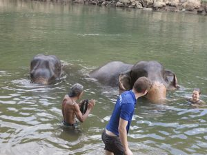 elefantes56