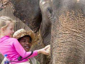 elefantes8